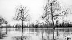 Inondations - Crue de la seine - Janvier 2018
