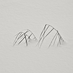 /// //// (Stefano Rugolo) Tags: stefanorugolo pentax k5 pentaxk5 smcpentaxm100mmf28 minimal minimalism grass snow art nature winter hälsingland sverige sweden abstract monochrome simplicity blackandwhite