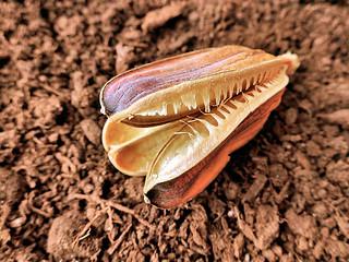 seadhead on soil