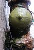 Intra Larue 966 (intra.larue) Tags: urbano urbana urban urbain téton teta street seno sein pecho paris moulding moulage moldeado intra france brust breast boob arte art