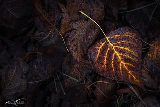 Fire leaf...