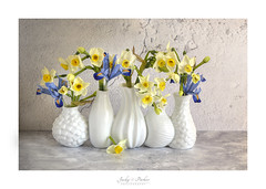 Spring Flowers (Jacky Parker Flower Photography) Tags: daffodils daffs narcissus iris blue yellow flowers stilllife spring studioimage indoors nopeople cutflowers flowerdisplay springdisplay beautyinnature freshness fragility delicate blooms flora springtime 2018 flowerphotography