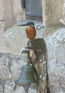 Kingfisher on the Palace Bell