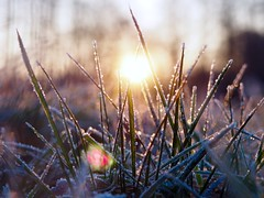 A   S Y M P H O N Y  O F   L I G H T (Vivi Black) Tags: outside outdoor winter crystals bokeh macro colors glory morning sun sunrise