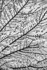 L'envers du décor -----+ (Titole) Tags: snow noiretblanc nb blackandwhite bw branches 15challengeswinner