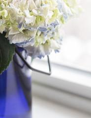 Oh So Blue ;( (lclower19) Tags: hydrangea blue bottle windowsill closeup