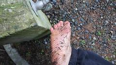IMG_1273 (bfe2012) Tags: barefoot barefeet barefooting barefooted barefooter barefoothiking barefootlifestyle feet dirtyfeet toughsoles