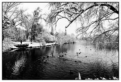 DSC08004_DxO (Jacquod1) Tags: arbre eau lac nature neige oiseaux paysage reflet noirblanc