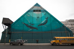Whaling Wall (cookedphotos) Tags: 2018inpictures toronto ontario canada canon 5dmarkiv streetphotography mural whale whales whalingwall wyland robertwyland urbanart redpath redpathsugarfactory triangle schoolbus walking 365project p3652018
