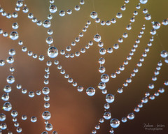 Billions of planets (Fabien Serres) Tags: eau goutte araignée toile