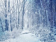 Silent forest (R_Ivanova) Tags: nature landscape forest winter snow tree monochrome textured blue bulgaria sony rivanova риванова зима гора сняг старапланина българия габрово текстура wood road
