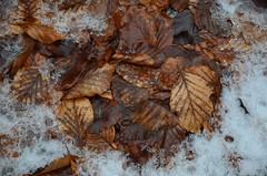 Steinwandklamm (anuwintschalek) Tags: nikond7000 d7k 18140vr austria niederösterreich steinwandklamm talv winter february 2018 lumi schnee snow ice jää eis sula tauwetter oja bach vesi wasser water
