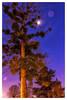 Reaching the Moon (Daniel_Hache) Tags: night exterieur parcheller sigma antony colorefexpro4 outdoor canon nuit blue winter february tree moon lune hiver arbre 1770 bleu eos fevrier ciel 550d îledefrance france fr sky