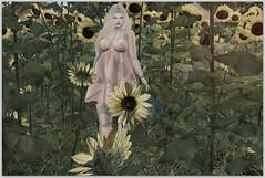 Wherever life plants you, bloom with grace (Suzy Brandi) Tags: botanical little branch lb clefdepeau skinnery catwa catya su emarie imitation hpmd kibitz taketomi sunflower flowers field maitreya