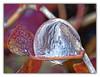Last Bubble of the Season (Silke Klimesch) Tags: 7dwf landscape ihopeitqualifiesasalandscape frozen soapbubble frozensoapbubbles frostwork fernfrost frosttracery ivy seifenblase gefroreneseifenblase eisblumen efeu bulledesavon cristaldeglace bolladisapone cristallidighiaccio balondesăpun boladesabão pompadejabón bańkamydlana kryształlodu мы́льныйпузы́рь ледяно́йузо́р 肥皂泡 makrofotografie nahaufnahme mzuikodigitaled60mm128macro olympus omd em5 microfourthirds dxophotolab on1photoraw
