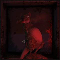 i'm a star in my hood-portrait 1 (Lalbu) Tags: sl secondlife rat