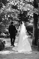 The walk (dmelchordiaz) Tags: seleccionar dmelchordiaz madrid spain bride married just jardín botánico botanical garden tree black white b w walk church country recién casados paseo