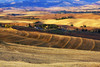 Agrippino Salerno  1185 Followers  126    Gallery Tuscan countryside (Agrippino Salerno) Tags: valdorcia valley tuscany italy sanquiricodorcia field morning summer agrippinosalerno canon manfrotto wheat countryside countryfarm countryroad colors