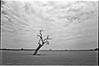 Twisted trees as far as the eye can see (Joshua Perera Photography) Tags: twisted gnarled gnarley 28mm f28 minolta dynax 7 ilford panf asa rodinal stand dev developed home field countryside country clouds landscape nature black white bw sunday excursion out for drive perth western australia