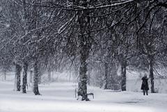 Let it snow (Nicolas Valentin) Tags: snow glasgow feel park cold winter