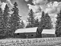 180109-22 Vieille grange (clamato39) Tags: noiretblanc blackandwhite bw monochrome barn grange ciel sky clouds nuages hiver winter snow neige charlevoix provincedequébec québec canada