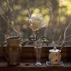 Rita Crane Photography: The Last Rose (Rita Crane Photography) Tags: rose window kitchenwindow stilllife bokeh wwwritacranestudiocom ritacranephotography 500x500