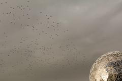 DSC_1299 (Introubles) Tags: fertilization vancouver falsecreek scienceworld canada cloudy crows flock flockofcrows science world