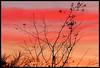 coucher de soleil (cbibi35) Tags: coucherdesoleil nature exterieur soir plante fleur soleil bretagne bzh couleur