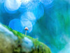 Deep Blue Sea (www.studio360fotografia.es) Tags: pentacon80mm setas valdeinfierno proyector projector deepbluesea olympus omd em10 macro mushroom bokeh desenfoque color fantasy fantasia fungi