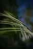 Wind (Daniela Romanesi) Tags: florestinha folhas lensbaby natureza palmeira sweet35 vento folhagem jardim garden jardinagem desfoque bokeh sky céu ornamental paisagismo quadro naparede