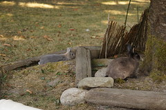 Toki and Flora (Tjflex2) Tags: bunny rabbit lapin lagomorpha lagomorph conejo