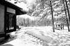 Soleil et détente en noir et blanc... (woltarise) Tags: montréal japonais jardin botanique neige hiver soleil ricohgr