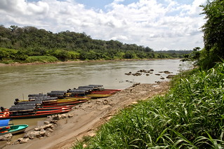 The river in the jungle