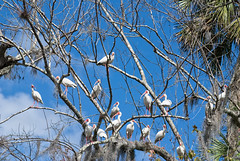 Blue Spring47 (Jeff Frankel) Tags: kissimmee fl
