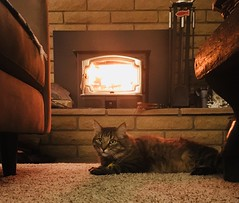 Keeping The Home Fires Burning or What Was Chucky Looking At? (A Wild Western Heart) Tags: warm home flame woodstove fireplace tabby katze chat gato cat