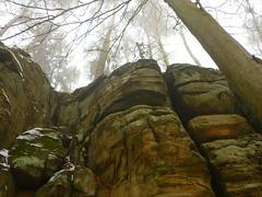 Felswand (Jörg Paul Kaspari) Tags: irrel ernzen naturpark südeifel eifel winter fels felsen rock felswand baum tree