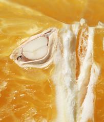 In the Orange Section (j.towbin ©) Tags: allrightsreserved© orange macro pip seed section pulp img1492 macromondays citrus ef100mmf28lisusmmacro