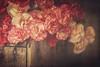 Kipp's Favorite (jm atkinson) Tags: texurebykerstinfrank carnations red pink coral wood stilllife kippsfavorite