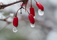 icedrop (szsuzsa7) Tags: ice drop nature nikon3200 macro