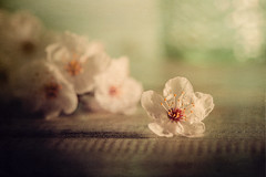 Happiness blooms from within (Ro Cafe) Tags: stillife blooms flowers whiteflowers selective focus bokeh pastelcolours textured nikkormicro105f28 nikond600 sundaylights