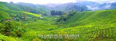 P1030495P2a (cth2206) Tags: cameron highland perak ipoh mossy forest malaysia boh tea garden lata kinjang