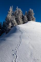 Journée hivernale idéale (MarKus Fotos) Tags: neige hautesavoie hiver winter snow chablais rhonealpes auvergnerhonealpes soleil thollonlesmemises thollon fevrier