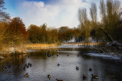 Winter does not want to leave ... (Julie Greg) Tags: landscape lake park colours winter trees england kent birds ice snow tree sky grass water wood