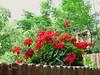 Blooming Geranium! ('cosmicgirl1960' NEW CANON CAMERA) Tags: ojen andalusia spain espana costadelsol manmade colourful yabbadabbadoo travel holidays