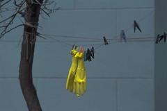 (Kirill Dorokhov) Tags: stillife art minimal gloves scene contemporaryart wall blue hanging