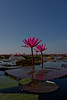 red lotus sea_147 (snappitt photography) Tags: redlotussea redlotusthailand red lotus sea udon thani