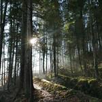 Sonnenstrahlen Tennbodenbach thumbnail