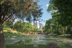 Framing garden (Mariano Colombotto) Tags: buenosaires jardinjapones garden park city green water pond trees travel tourism nikon photographer photography ngc argentina jardin