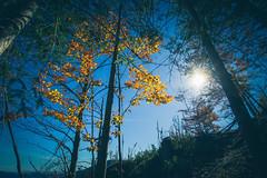 (c) Wolfgang Pfleger-8541 (wolfgangp_vienna) Tags: niederösterreich loweraustria austria österreich schneeberg schneebergland herbst autumn colorful bunt wald wiese blue blau blauerhimmel