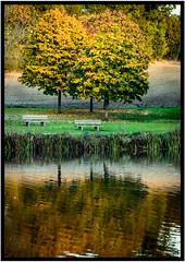 Autumn color's (SweBPicS Photography) Tags: lake autumn color nikonfrance nikon nature animals duck birds water wacom sigma sigmafrance sauvage landscape adobe lightroom photography photoshop photograph
